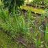 Опора для растений Гладиолус высокий 0,9м 1шт П-0321